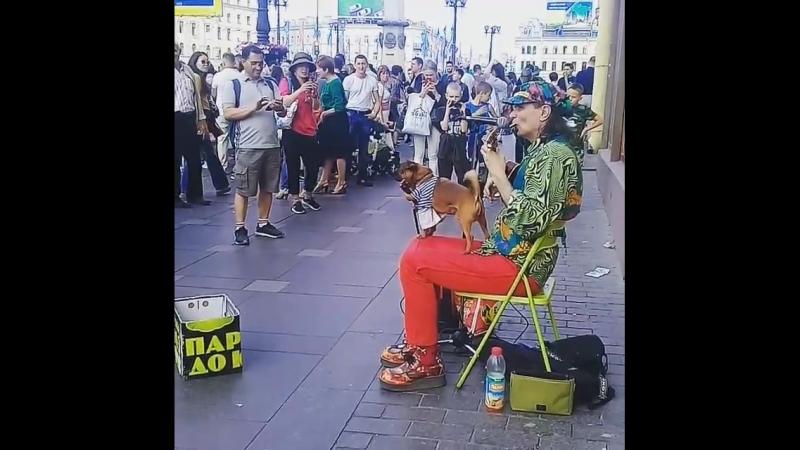 Собака Певец