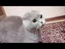 Говорящие коты! Лучшая подборка №11