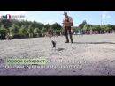 Во Франции ворон научили убирать мусор
