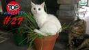 ПРИКОЛЫ 2019, ТОП СМЕШНЫХ ВИДЕО С КОТАМИ/Смешные животные/Смешные кошки/TOP FUNNY PETS 27