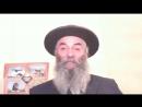 43.2 Тора. От Адама до Потопа Текст на Сайте