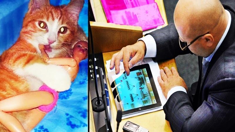 Тест на УПОРОТОСТЬ: Когда спалился. Кот и подружка. Будни депутата