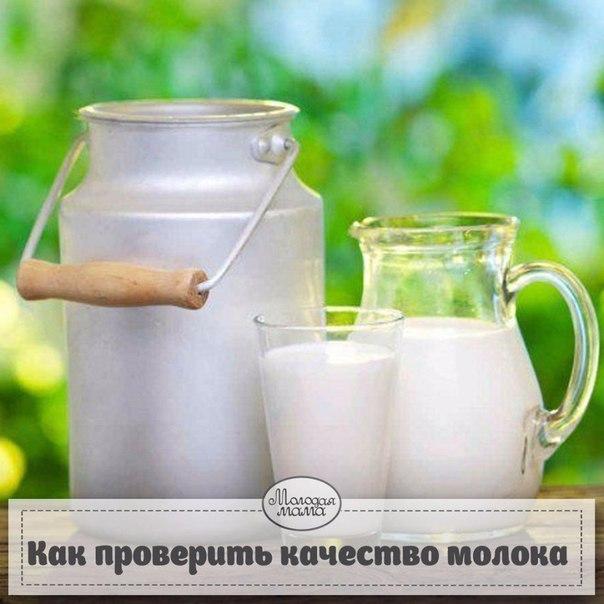 Как в домашних условиях проверить качество молока в домашних условиях