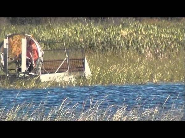 Wild rice harvest in Canada. Сбор дикого риса в Канаде.