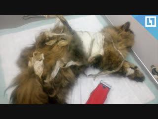 Кошку изнасиловали и обмотали скотчем