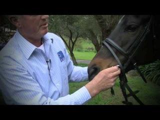 Equine Dentistry | Horse Bit Size, Fit Comfort with Equine Dentist Mark Burnell | Horseland