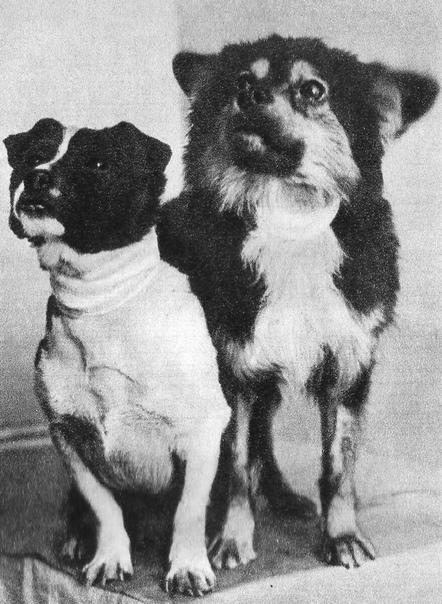 На фото  две беспородные собаки: Ветерок и Уголёк