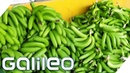 Bananen pflücken So hart ist der Ernte Job Galileo ProSieben