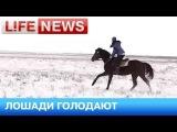 Фермеры борются за выживание 15 породистых лошадей в Ростовской области