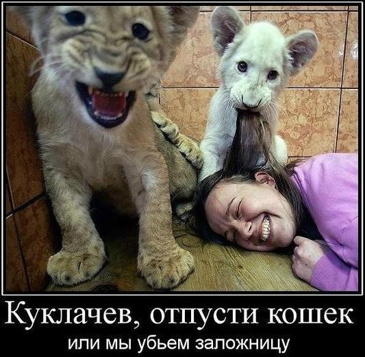 http://cs319319.userapi.com/v319319820/30a9/20F2NAdfMrE.jpg
