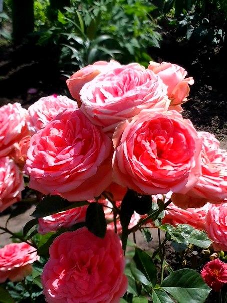Вся красота цветка заключается в его неповторимости...
