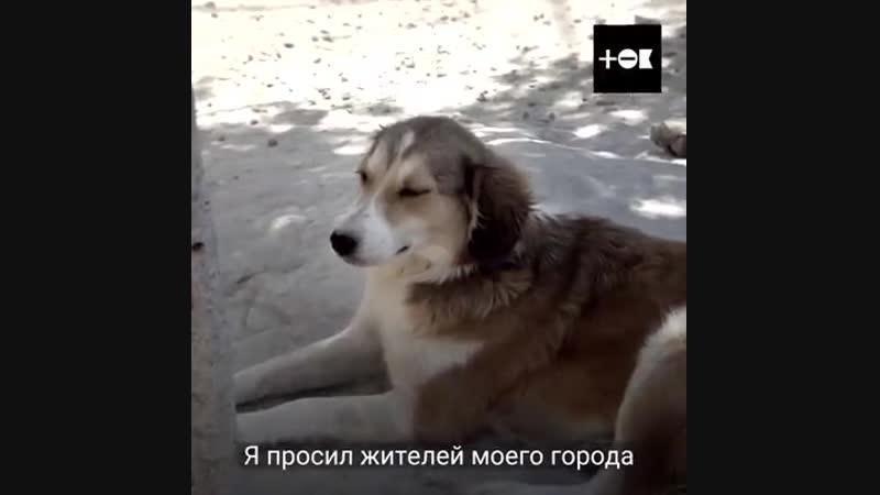 Мужчина продал все, чтобы спасти бродячих собак