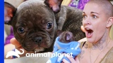 Amanda Finds The Perfect New Home For This Adorable Puppy Amanda To The Rescue