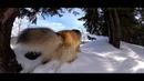 Прогулка с собаками. Тест стедикама Feiyu G6 с камерой YI 4K.