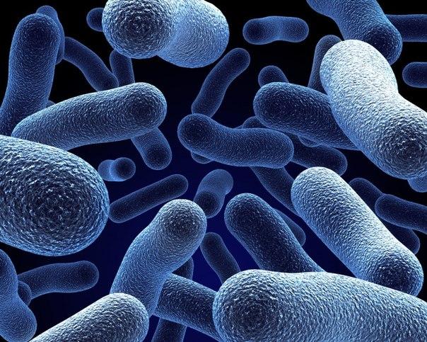 #пробиотики #нормофлорины