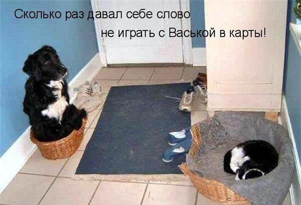 http://cs7052.vk.me/c7001/v7001856/10e83/k4oCqm_Bnvk.jpg