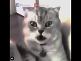 Операция кошки