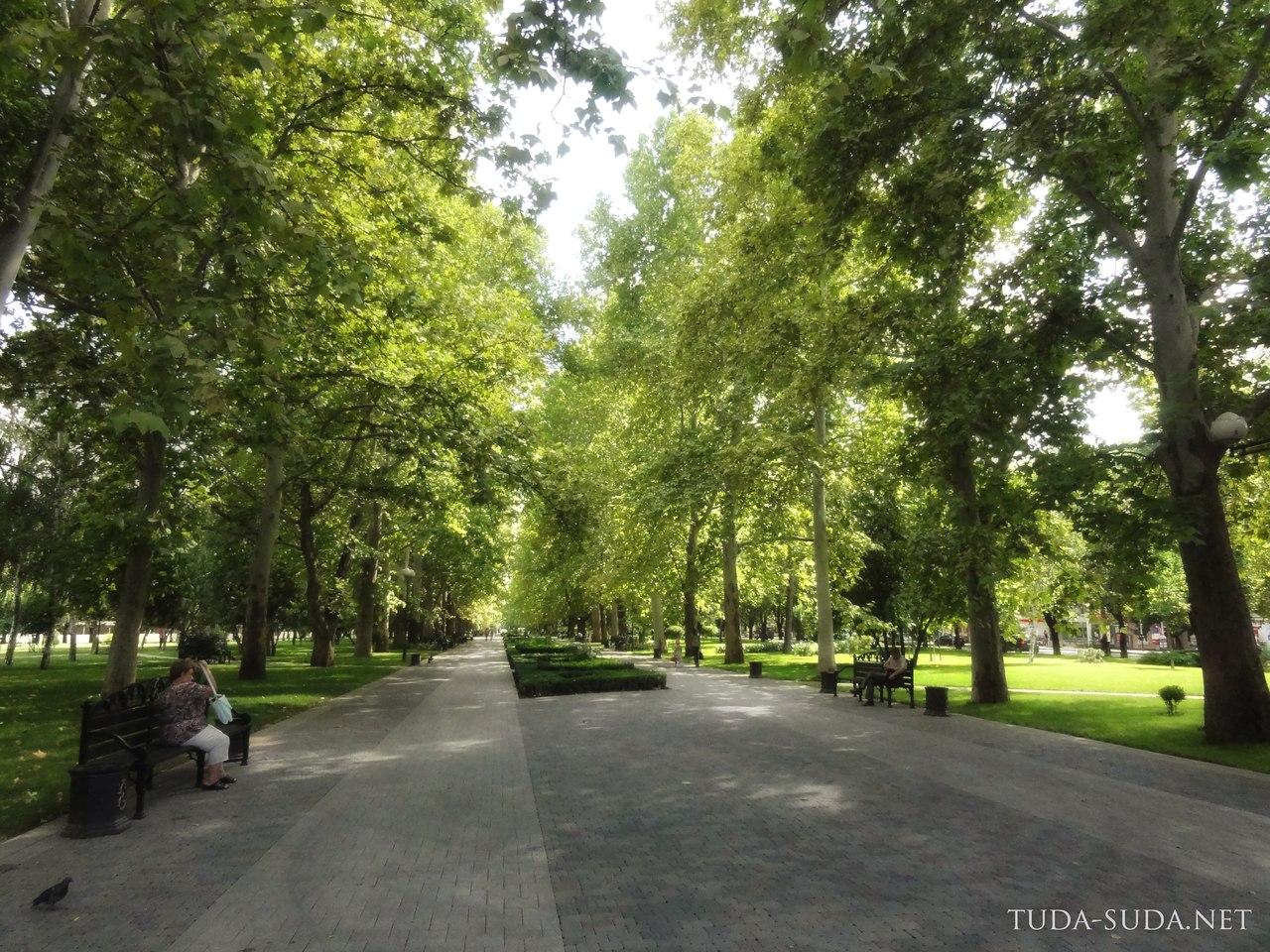 Аллея платанов, Краснодар