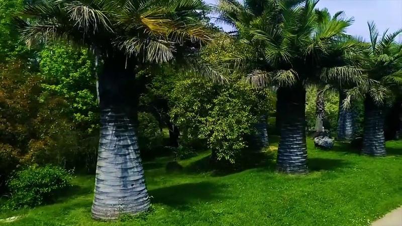 დენდროლოგიური პარკი
