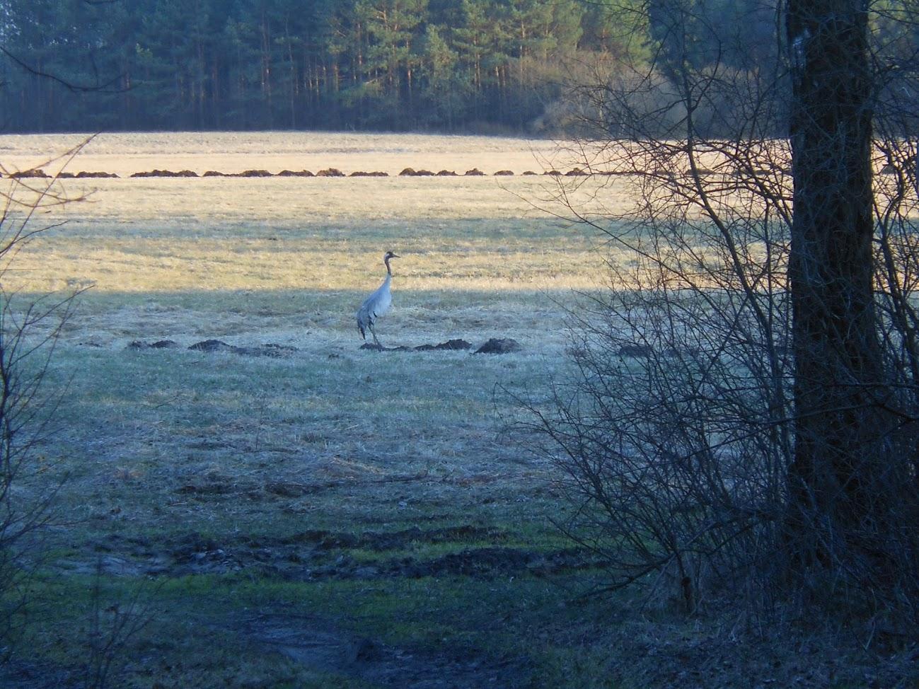 Природа Польша Нарев