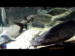 огромные рыбы, животные в огромных аквариумах-3