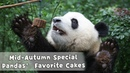 Mid-Autumn Day Special: Mooncakes Are Pandas' Favorite!   iPanda