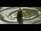 Рыбалка летом на карася на удочку с берега