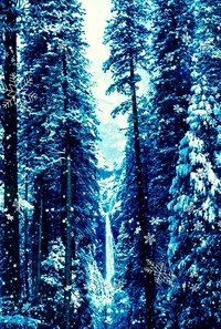 Birdy – white winter hymnal