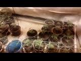 Полицейские изъяли партию марихуаны