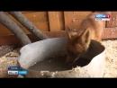Кошка Нюша и маленькие сурикаты