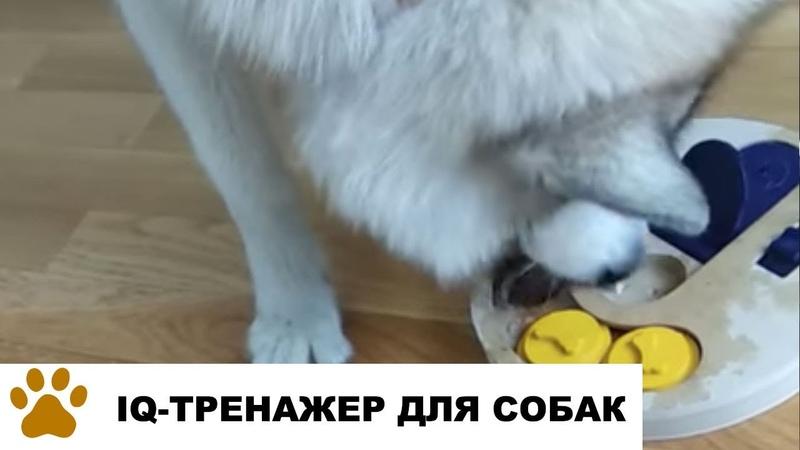 Дрессировка собак: тренажер интеллекта собак Hoopet