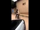 Как перевозить козу