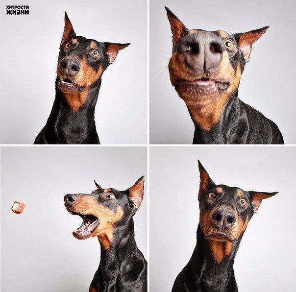 Забавные собаки Также по теме