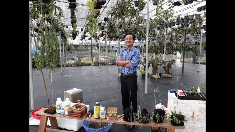 Anh Nguyễn Ngọc Hà Chia Sẻ Từ A Đến Z Về Giá Thể, Giải Độc, Chống Sốc, Chăm Sóc Hoa Lan