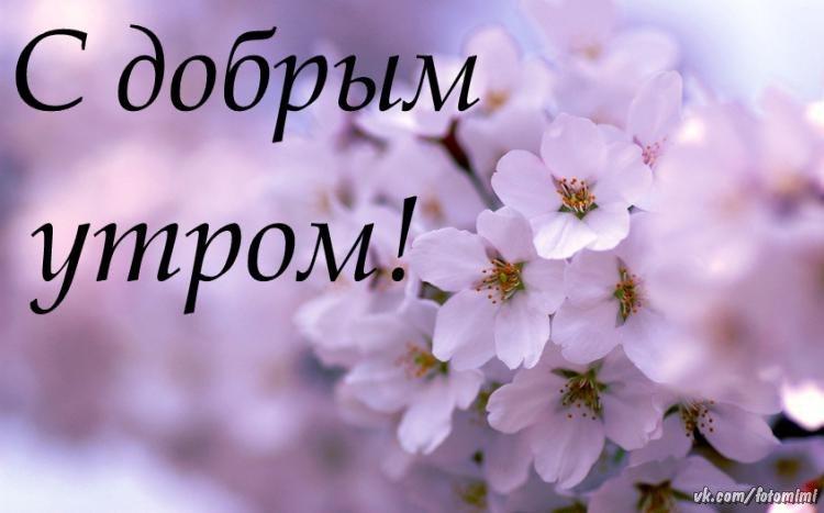 https://sun1-9.userapi.com/c846123/v846123800/19751c/oN4FlN1juDw.jpg