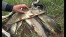 Эта блесна ловит ВСЕГДА Рыбалка на ЩУКУ с лодки