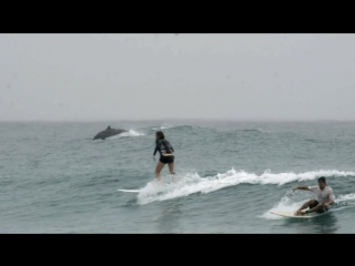 Dolphins and Surfers