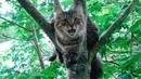 Как снять кота с дерева.