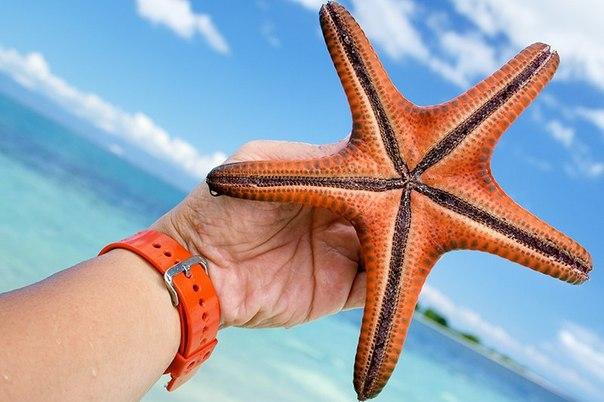Make travel туризм путешествия отдых