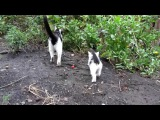 Кошка мурчит на котенка  Заботливая кошка мама