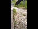Змея Гадюка болотная