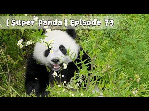 Super Panda Episode 73 iPanda