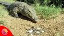 Đây là kẻ thù mà Cá Sấu căm ghét và muốn ăn thịt nhất