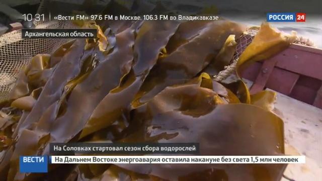 Новости на Россия 24 • В Архангельской области начали заготовку водорослей