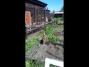 балабан прилетел часть 2