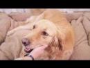 HOOPET собака кровать маленькая собака Съемная Товары для кошек Подушки антипригарным волосы дом любимчика