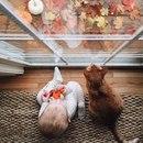 Желаю всем прекрасной осени! Не забывайте, что главная погода - это та…что в душе…