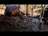 Бобровая плотина Фильм, 2009