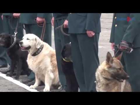 В Курской области служебные собаки проявили себя в поиске психотропных веществ