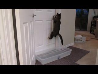 кот открывает дверь.